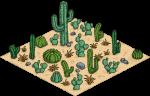 cactuspatch