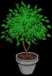 ficusplant_menu