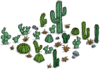 wildwestcactuspatch