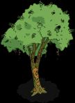 brazilwoodtree